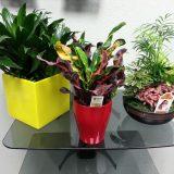 Кімнатні рослини не лише краса, а й користь