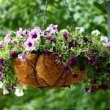 Особливості догляду за квітами в кашпо
