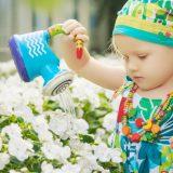Як отримати м'яку воду для поливу вазонів та квітів?
