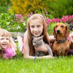 Дитина хоче домашню тварину, чи варто погоджуватися?