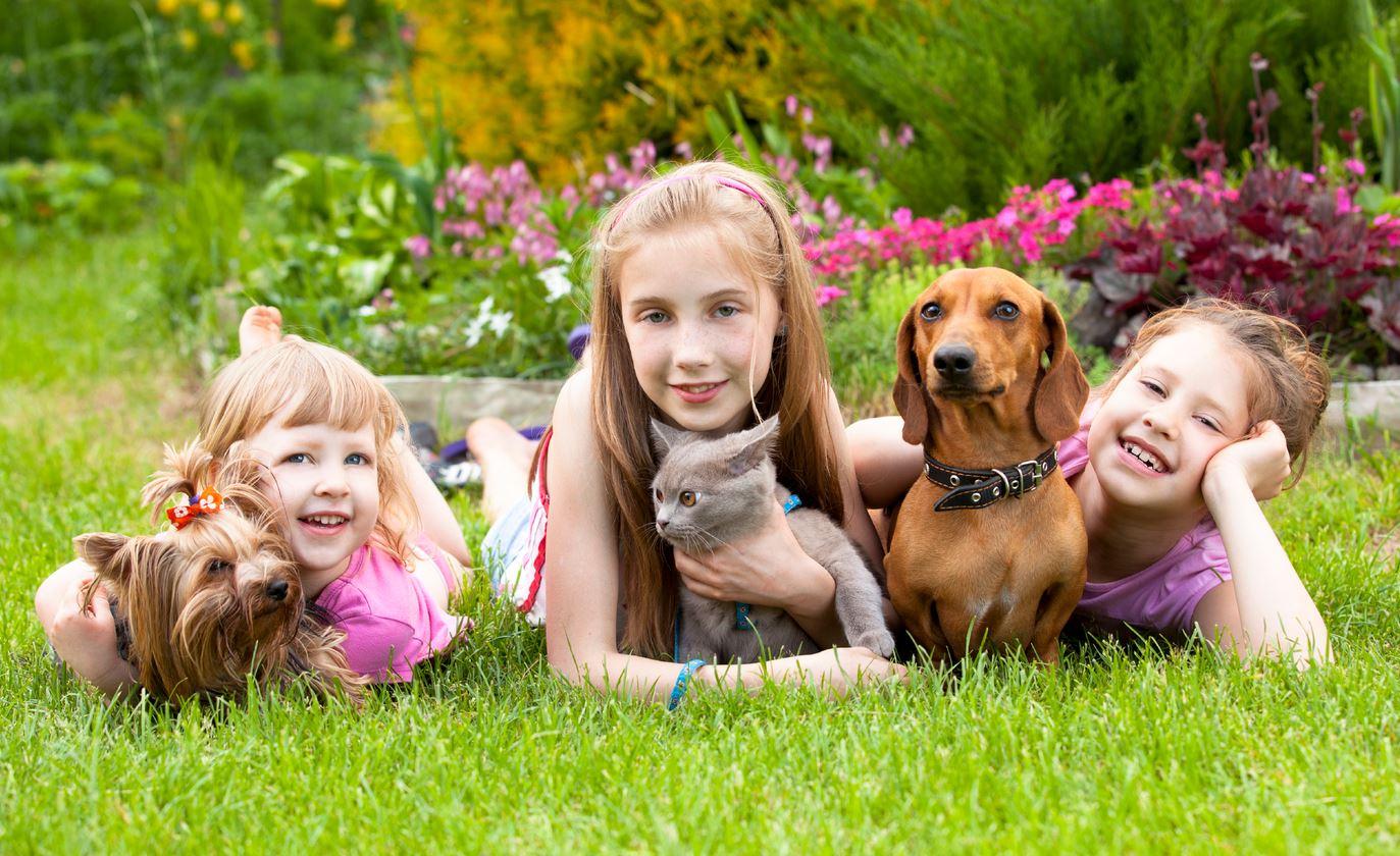 Якщо дитина ну вже дуже хоче домашню тварину - купіть йому улюбленця