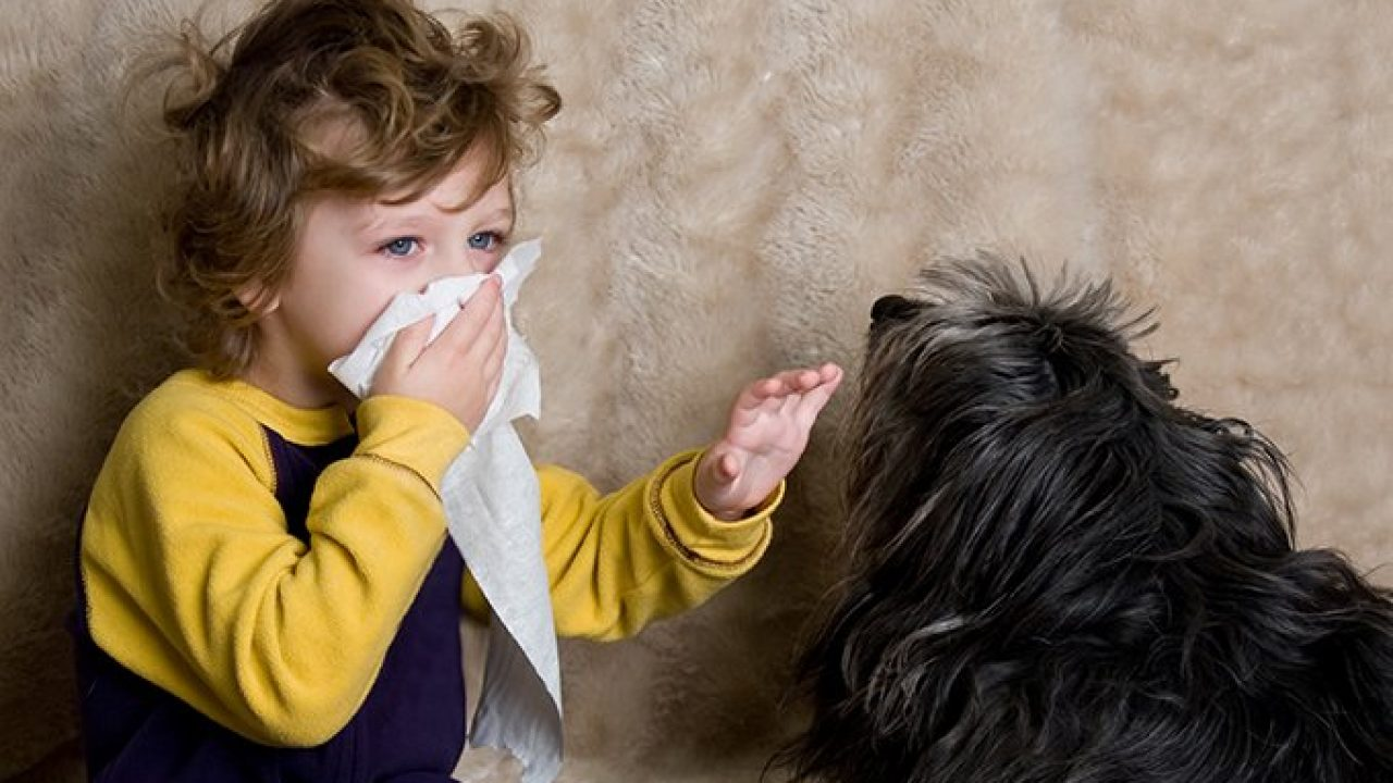 Чи потрібні діткам домашні тварини і які вихованці найбезпечніші для здоров'я?
